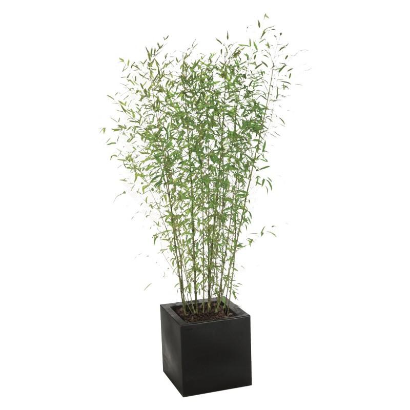 plante bambou 180 200 aliance mobilier. Black Bedroom Furniture Sets. Home Design Ideas